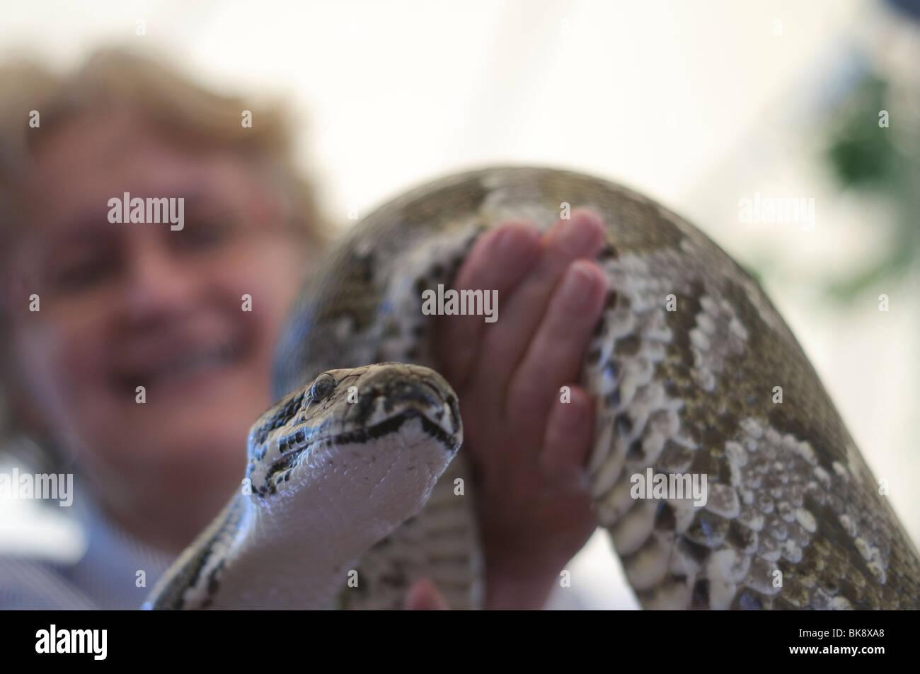 Mujer con Big Snake, centrarse en las serpientes jefe Imagen De Stock