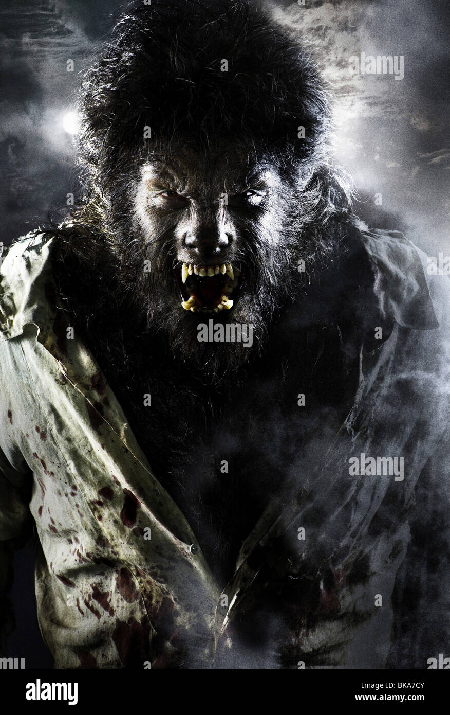 El Wolfman Año : 2010 Director : Joe Johnston Benicio Del Toro Imagen De Stock