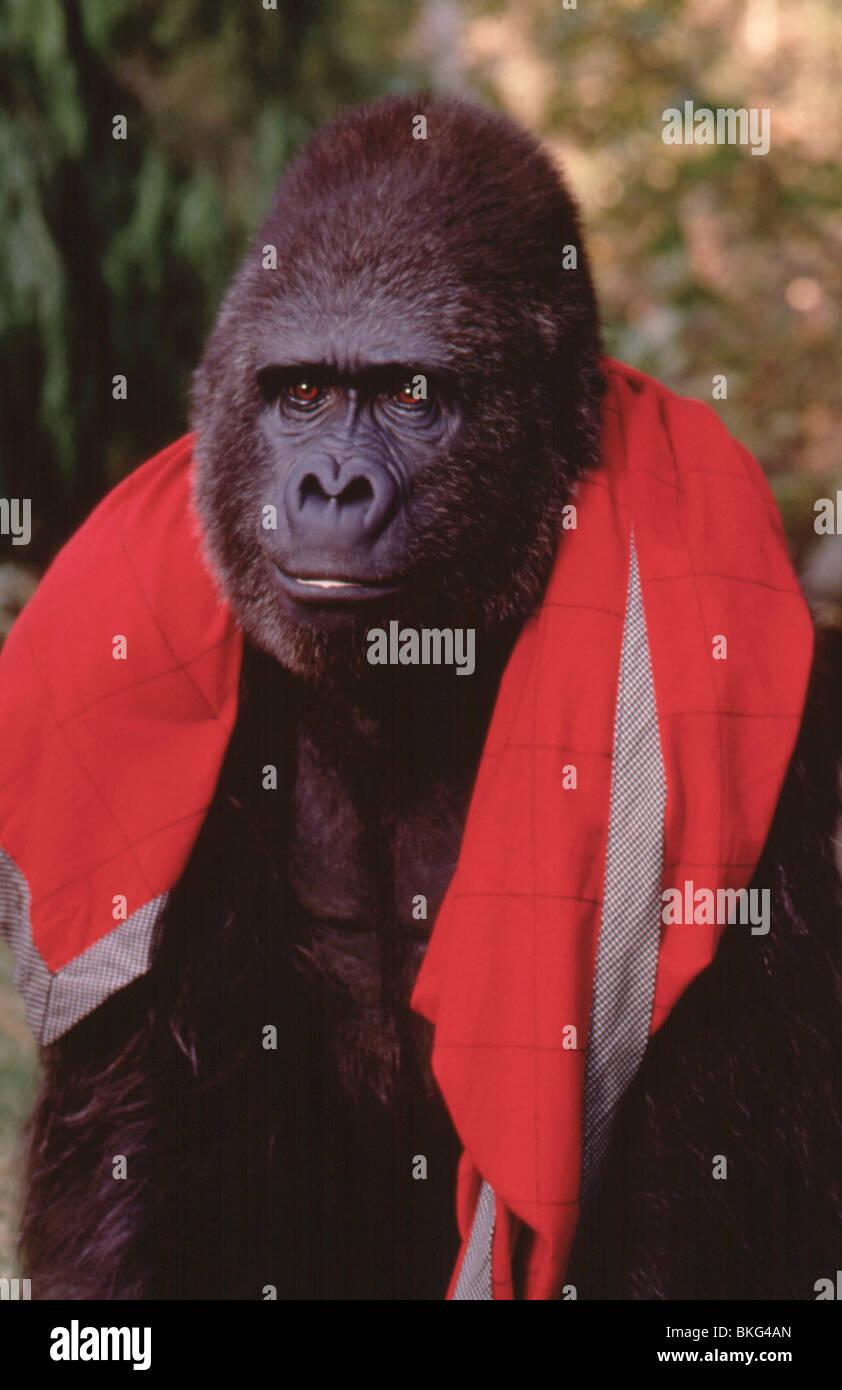 AMIGO -1997 Imagen De Stock