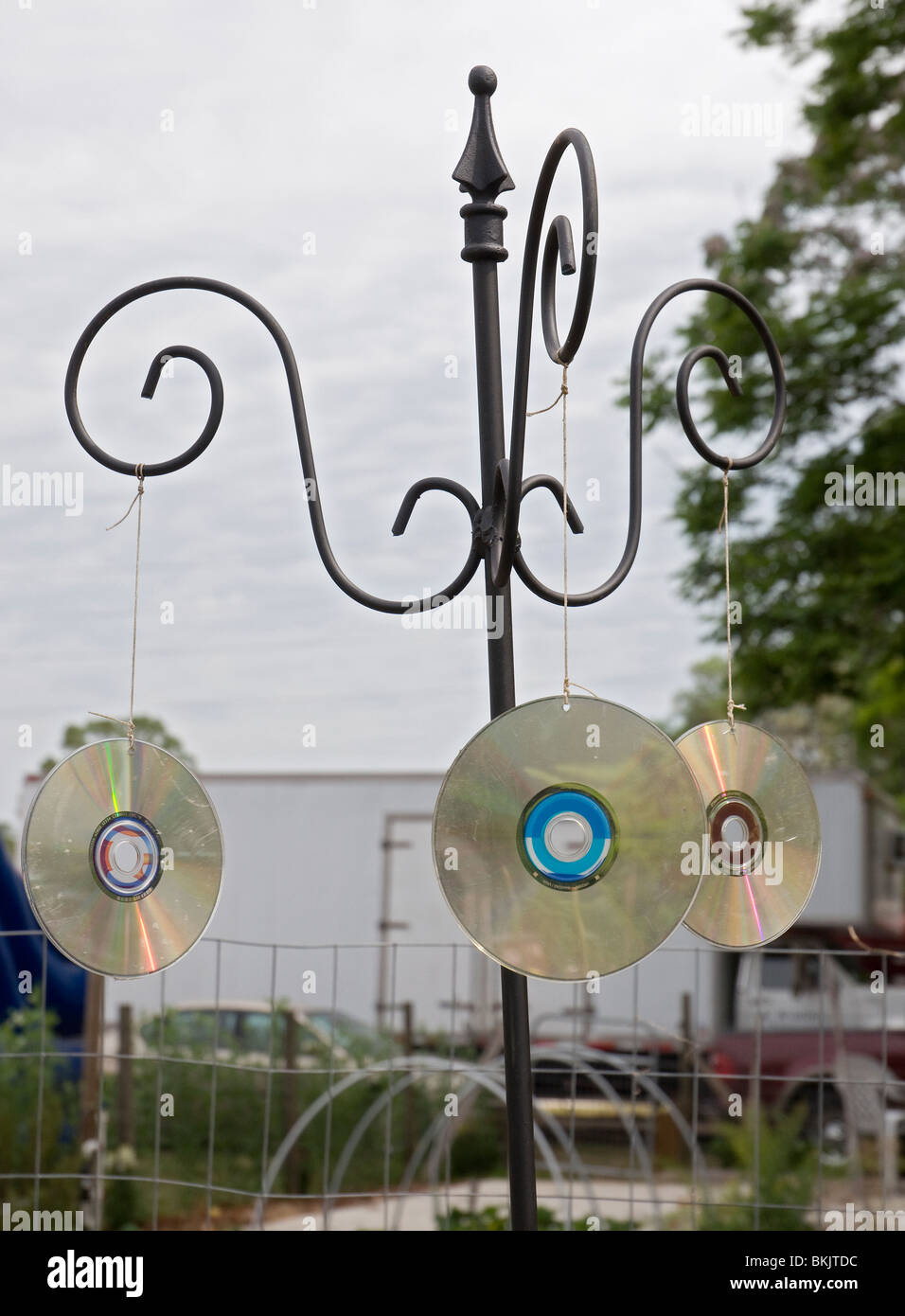 Los huertos comunitarios de alto Springs Florida cd urbano espantapájaros para pájaros descarriados Foto de stock