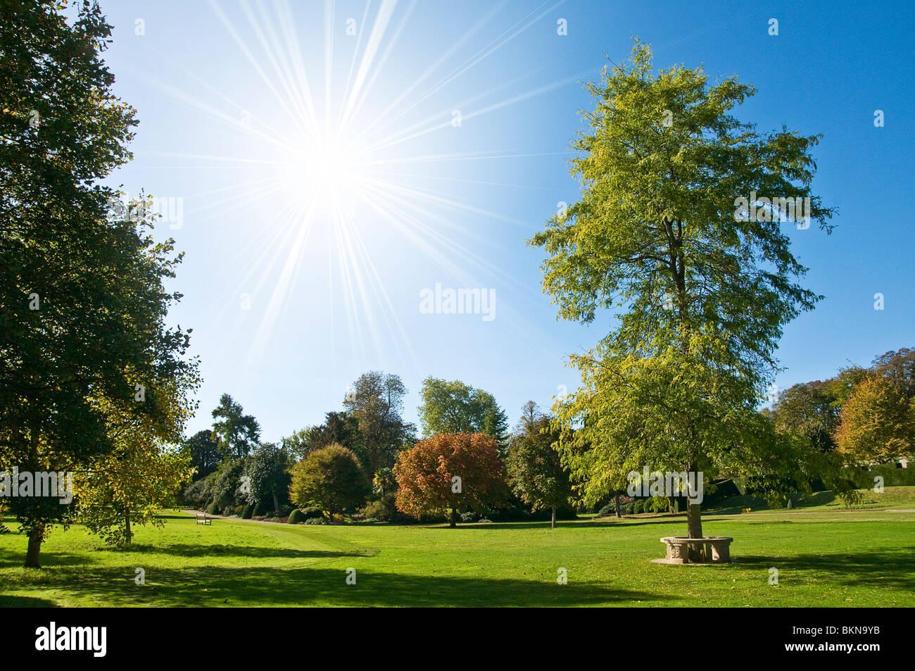 Parque de verano Foto de stock