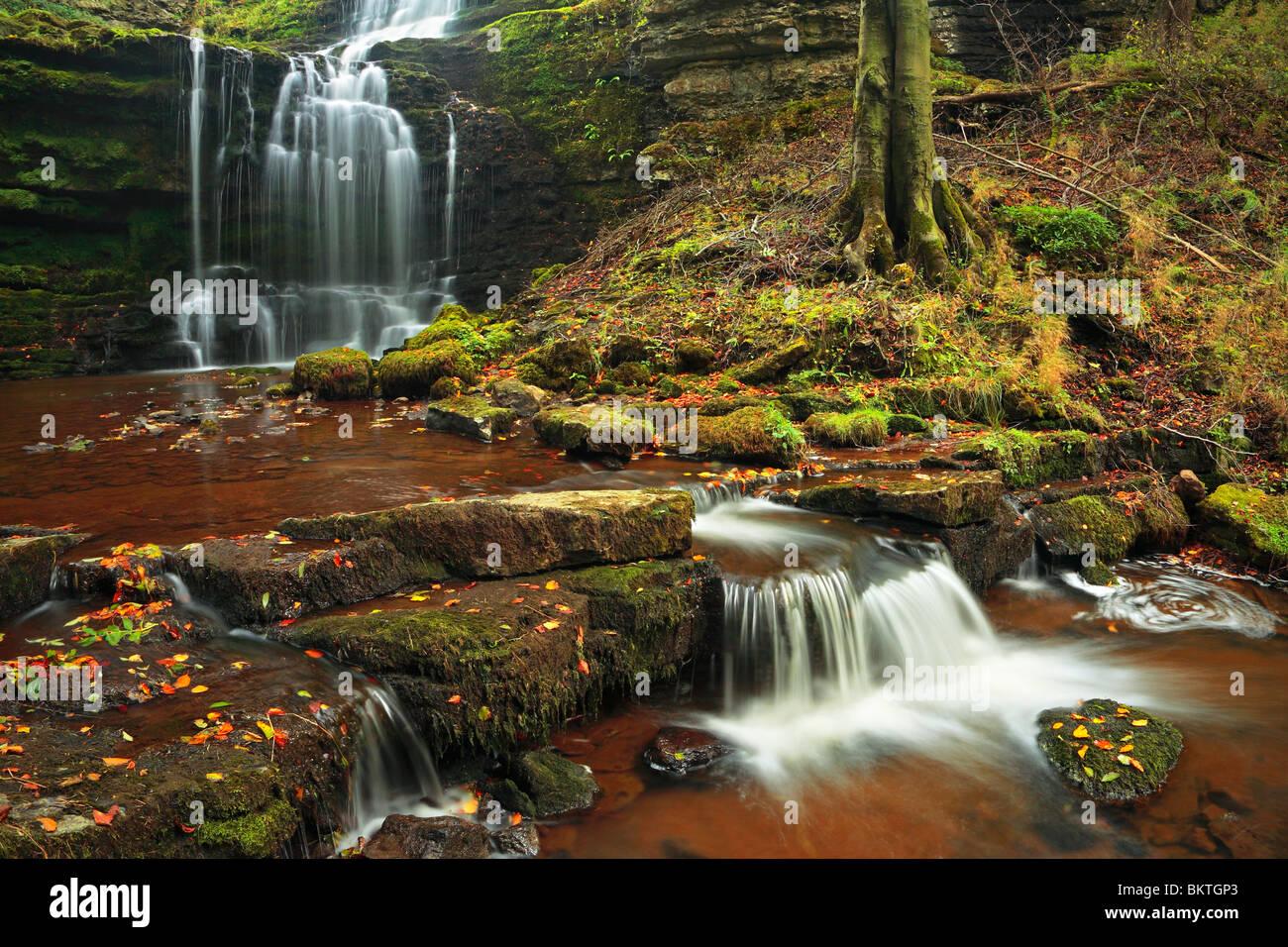 Colores del Otoño en Scaleber fuerza cerca de asentarse en los valles de Yorkshire de Inglaterra Imagen De Stock