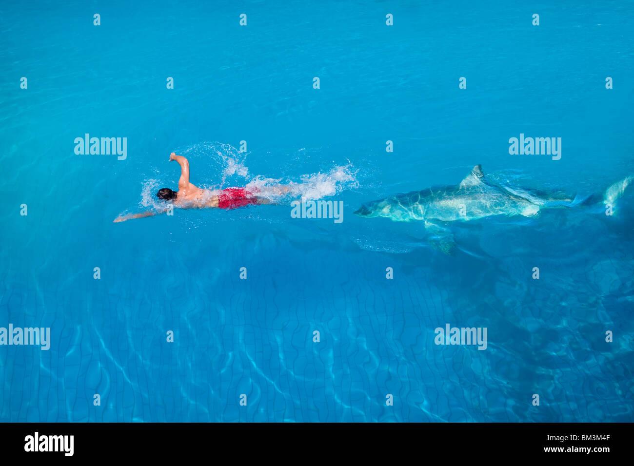 Siendo perseguido por un tiburón Imagen De Stock