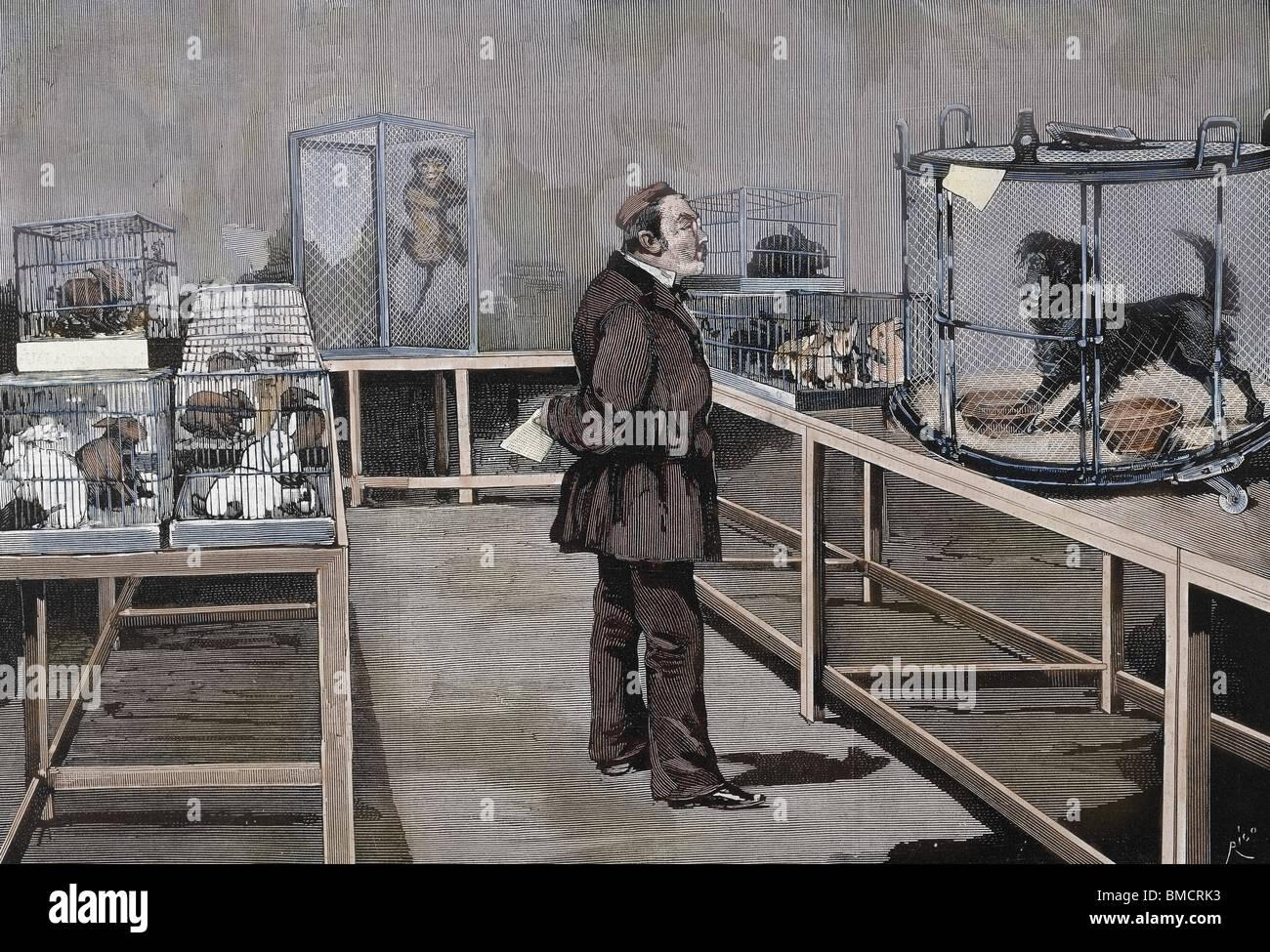 Louis Pasteur (1822-1895) químico y bacteriólogo francés. Pasteur observa los efectos de la inoculación del virus de la rabia. Paris Fotografía de stock - Alamy