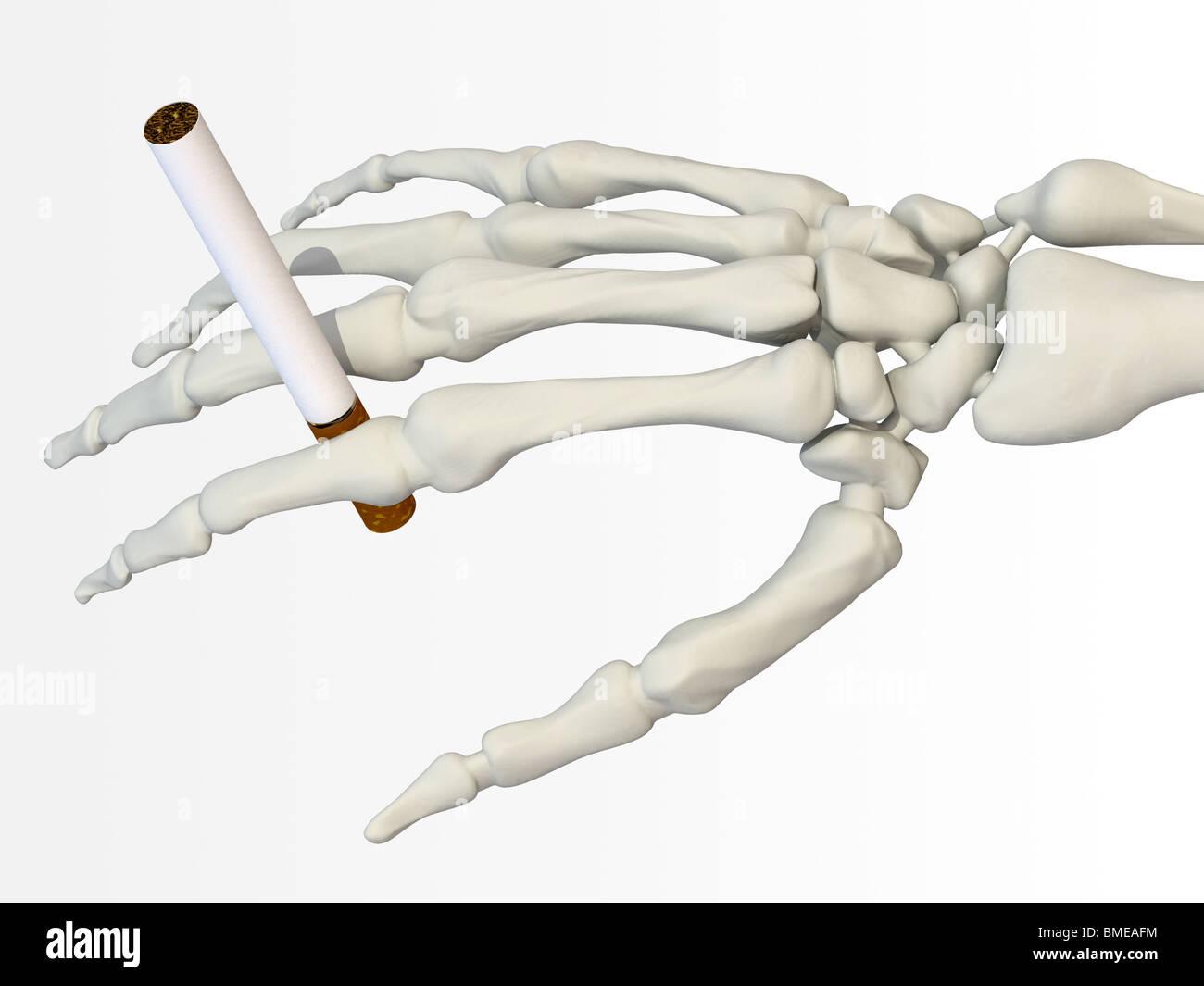 Mano esqueleto con cigarrillo Foto & Imagen De Stock: 29819096 - Alamy