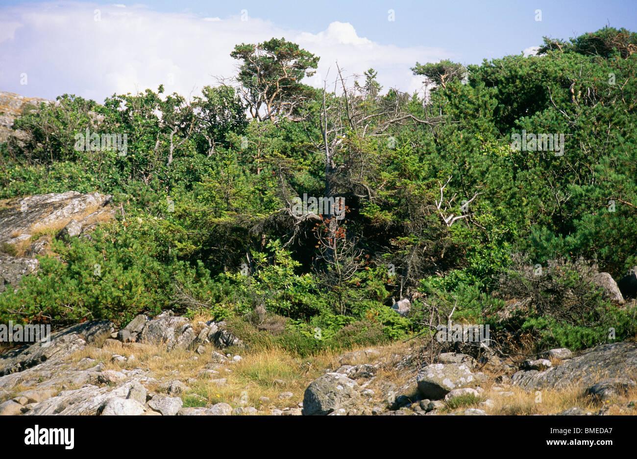 Vista del paisaje con una exuberante flora Imagen De Stock