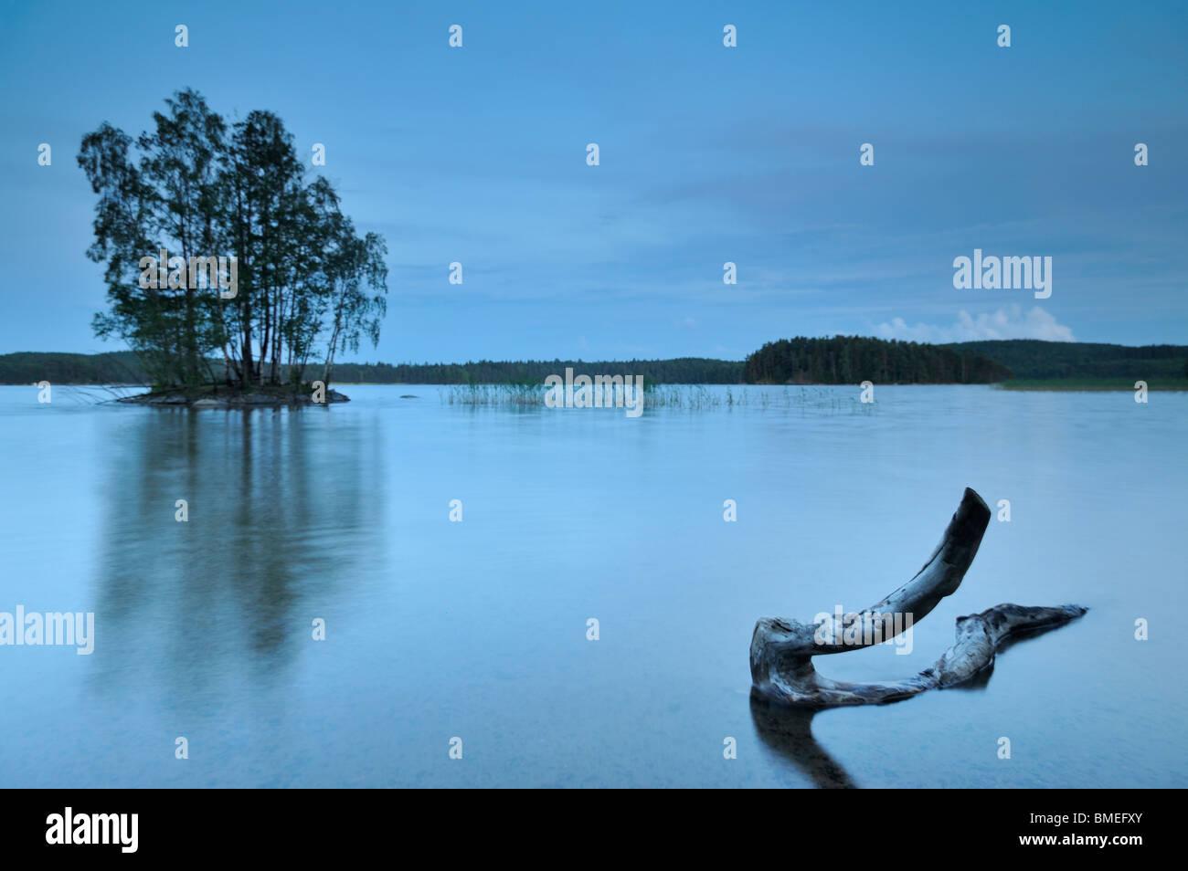 Escandinavia, Suecia, Vastergotland, tronco de árbol en el lago Foto de stock