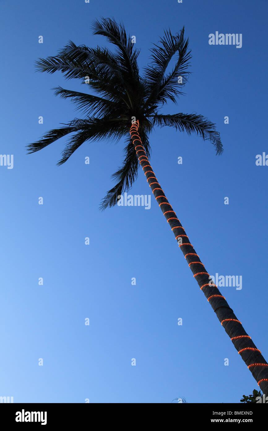Palmera Ayer Batang (ABC), playa de Pulau Tioman, Malasia Foto de stock