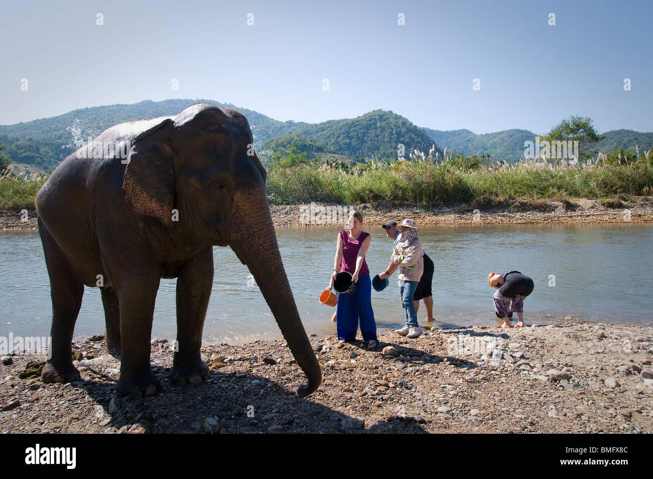 Tailandia, al norte de Chiang Mai: Lek de elefantes de elefantes rescatados de la granja, un lugar alternativo para Imagen De Stock