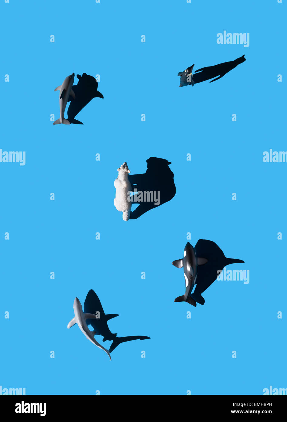 Los animales marinos y el oso polar disparó desde arriba. Imagen De Stock
