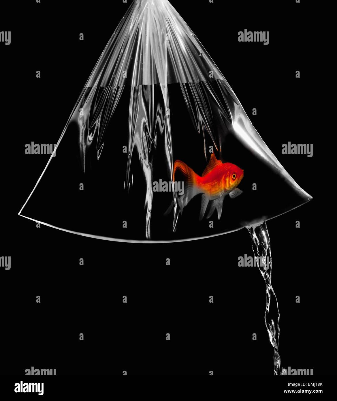 Leaky bolsa con goldfish en ella Foto de stock