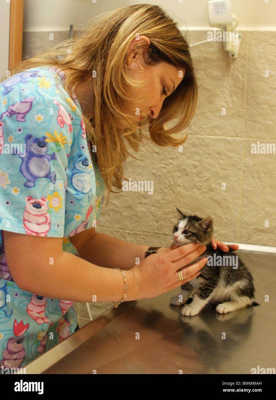 Vet hembra trata un gatito recién nacido Foto de stock