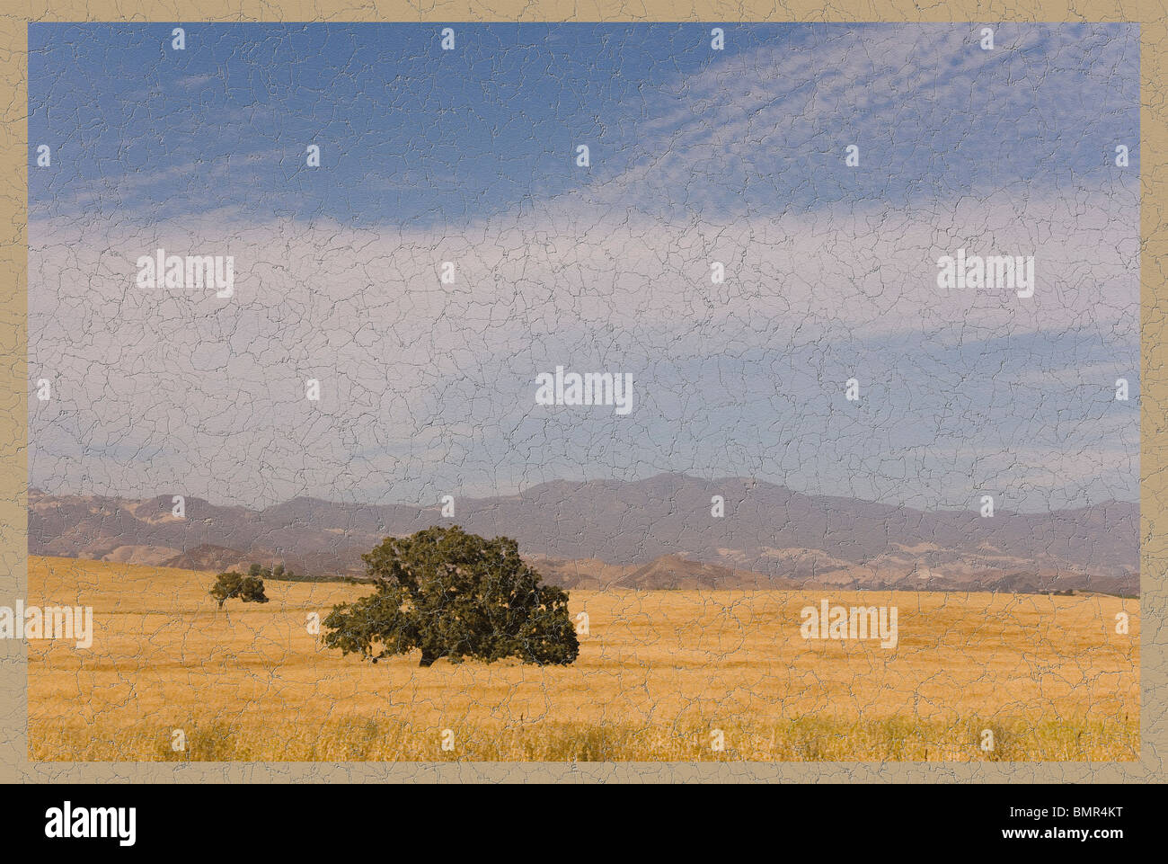 Árbol solitario Imagen De Stock