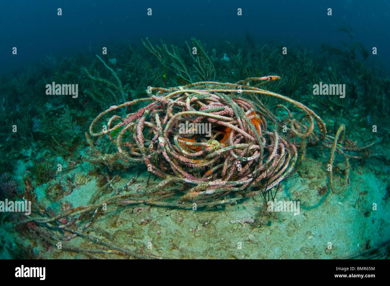 Descarta la soga que cubrían el arrecife de coral en Palm Beach, FL. Cuerda de pescar y atrapar, mutilan y Imagen De Stock