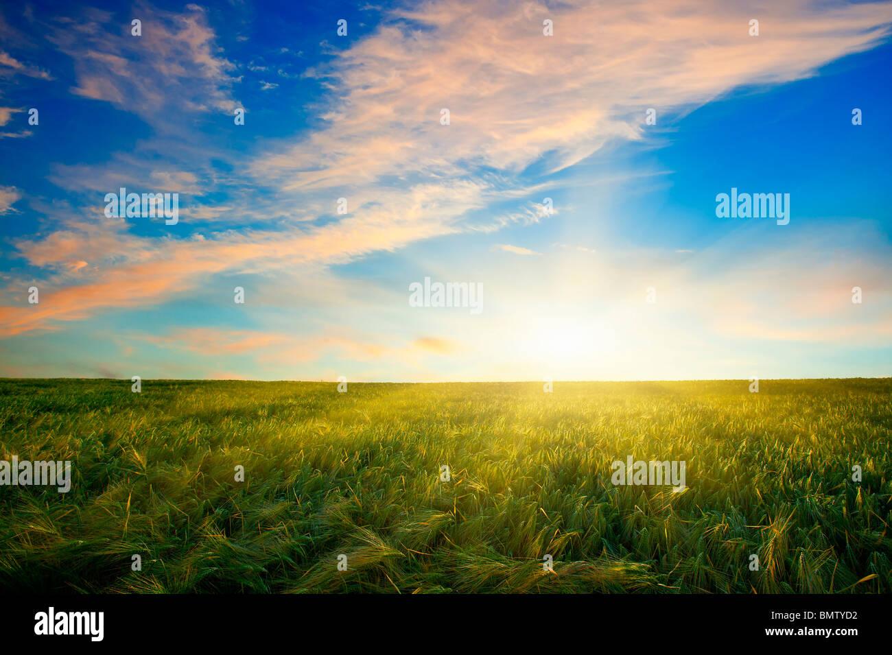 Atardecer en campo de trigo Foto de stock