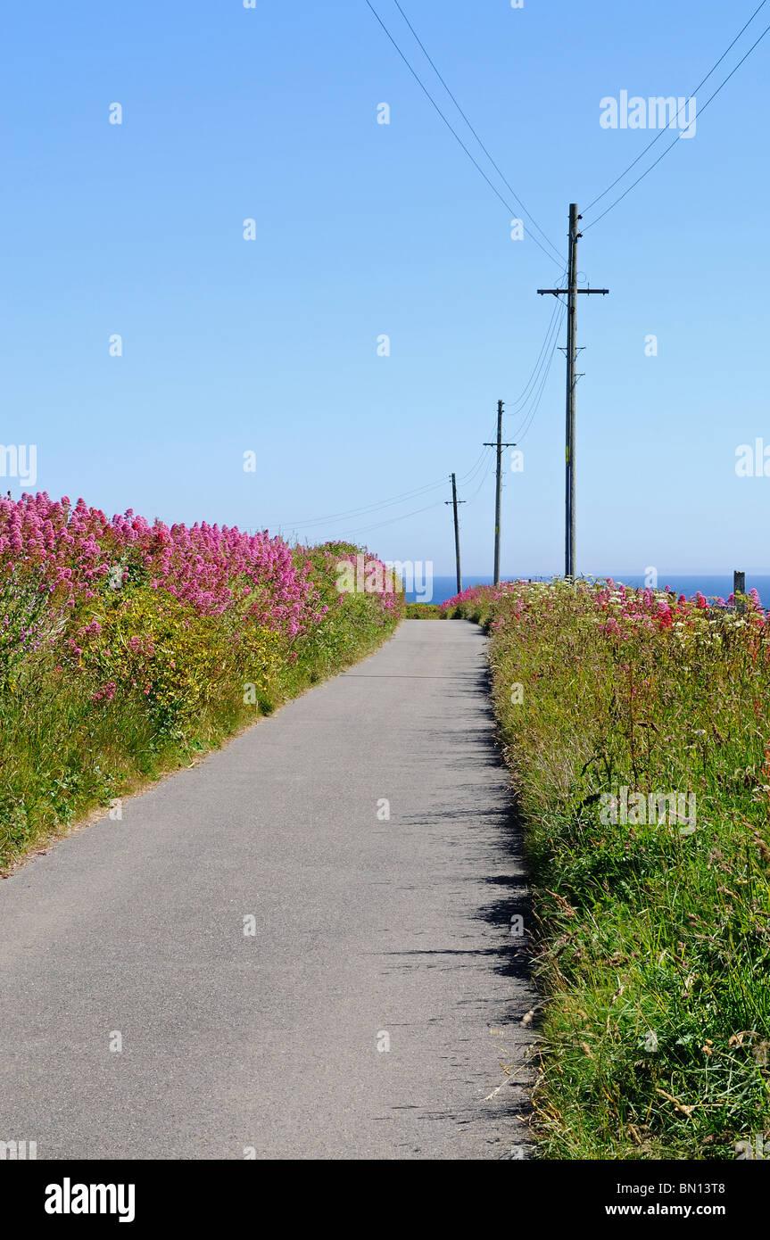 Un tranquilo carril cornish, norte de Cornwall, Inglaterra, Reino Unido. Imagen De Stock