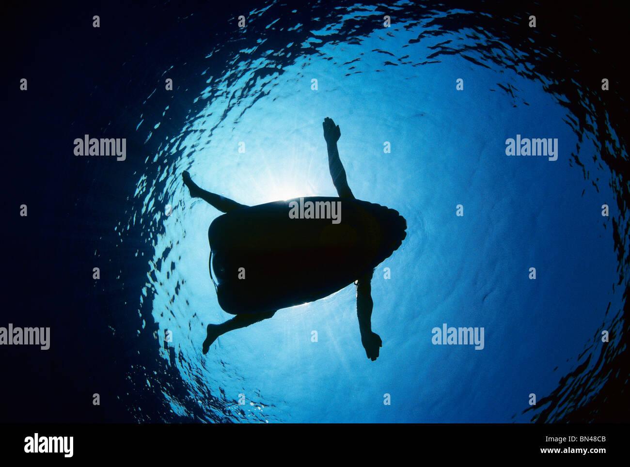 Nadador de balsa inflable demostrando por qué los tiburones atacan a los humanos, potencial víctima de ataque de Foto de stock