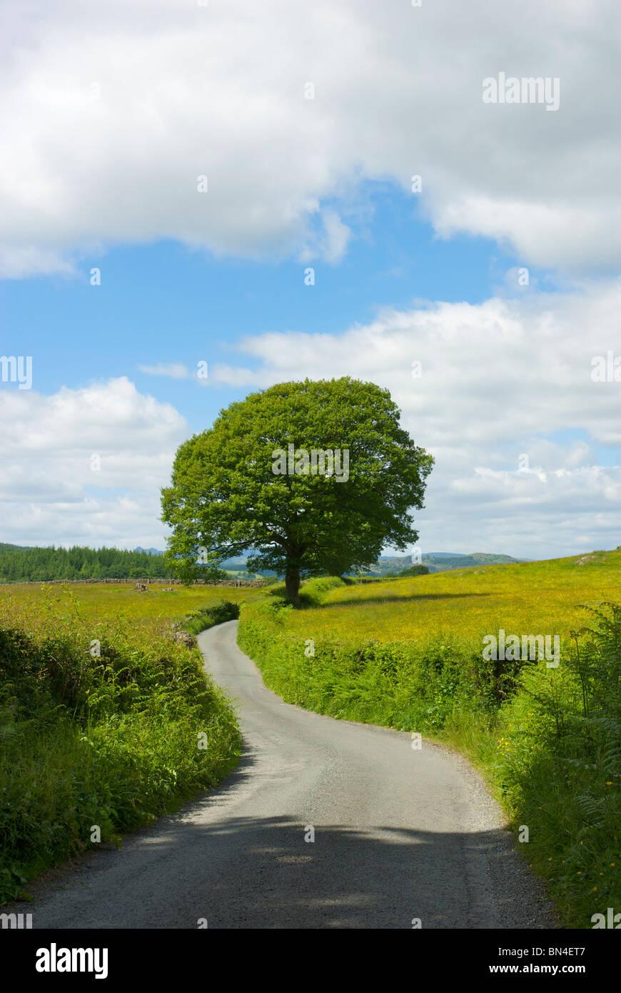 País tranquilo lane, Cumbria, Inglaterra Imagen De Stock