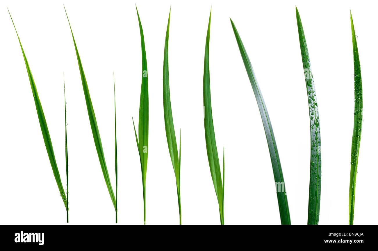 hojas de hierba Imagen De Stock