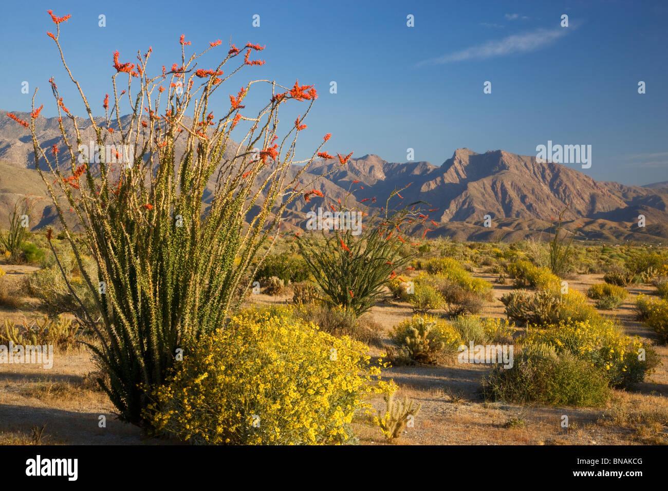 Desierto Anza-Borrego State Park, California. Imagen De Stock