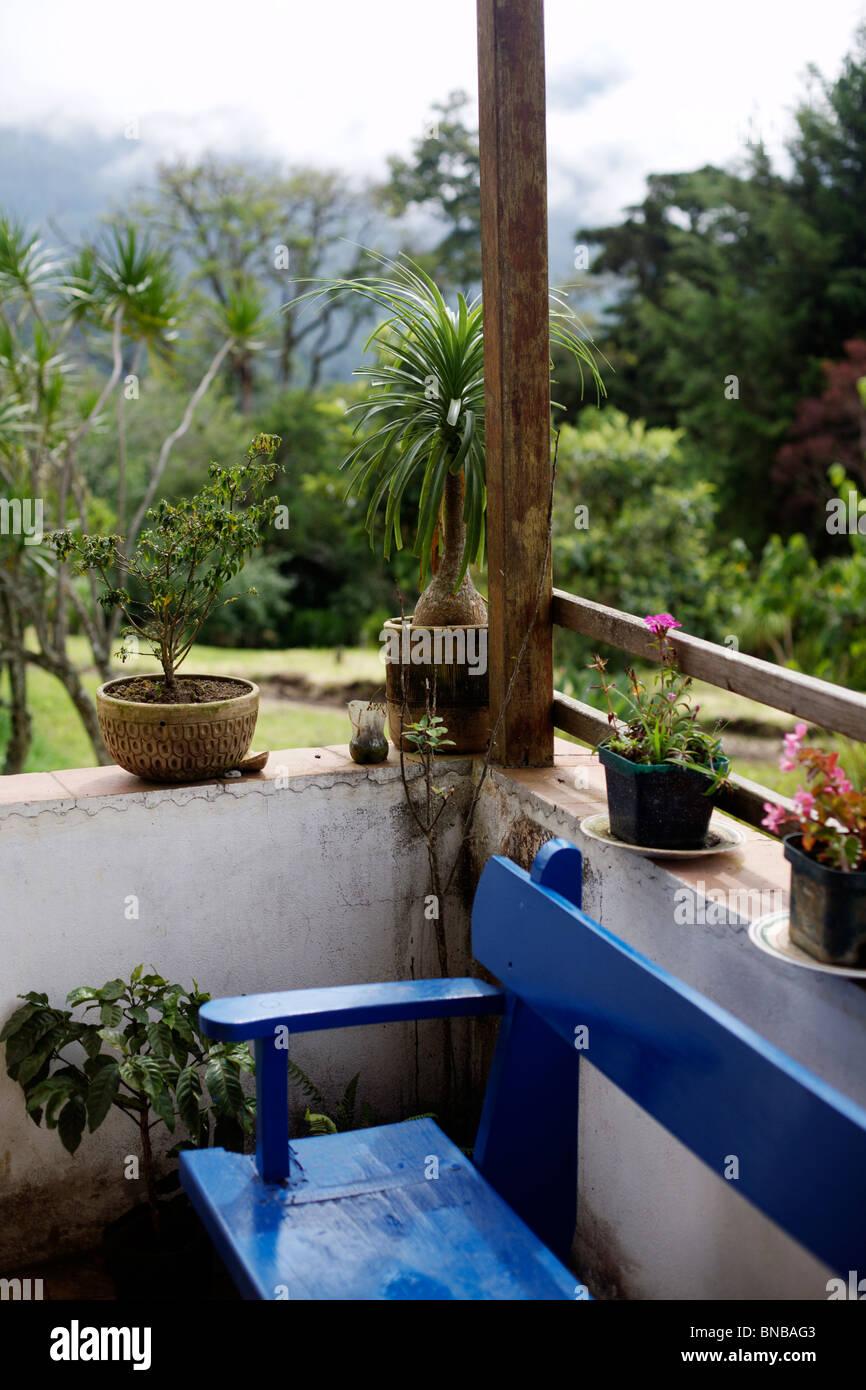 Las Plantas En Una Terraza De Estilo Colonial En Una Casa En