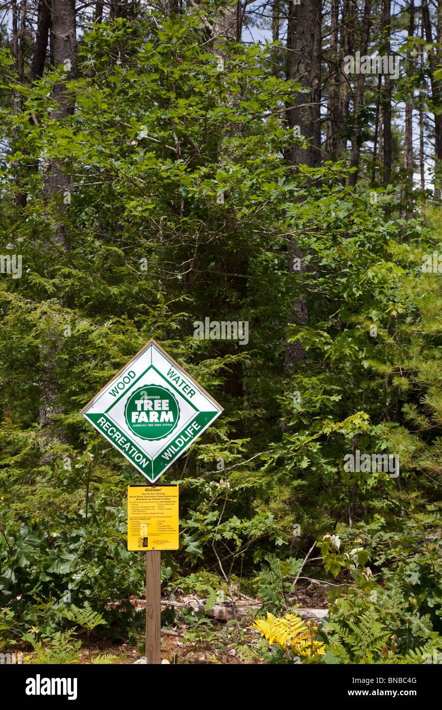 Hollis, New Hampshire - un árbol granja abierta para uso recreativo. Foto de stock