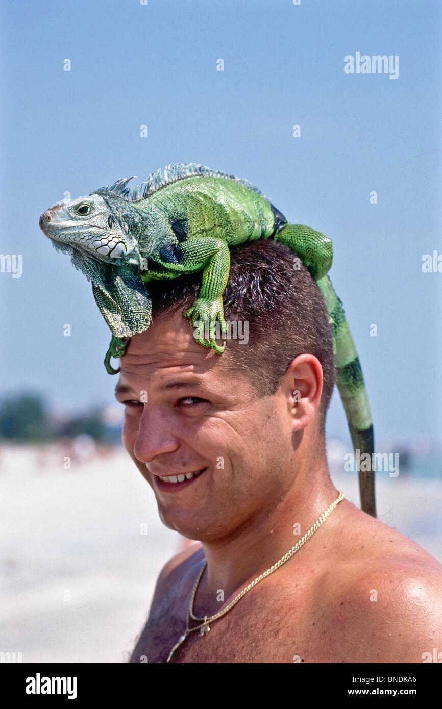 Iguana verde cabalgando sobre su cabeza de propietarios. Señor © Myrleen Pearson Imagen De Stock