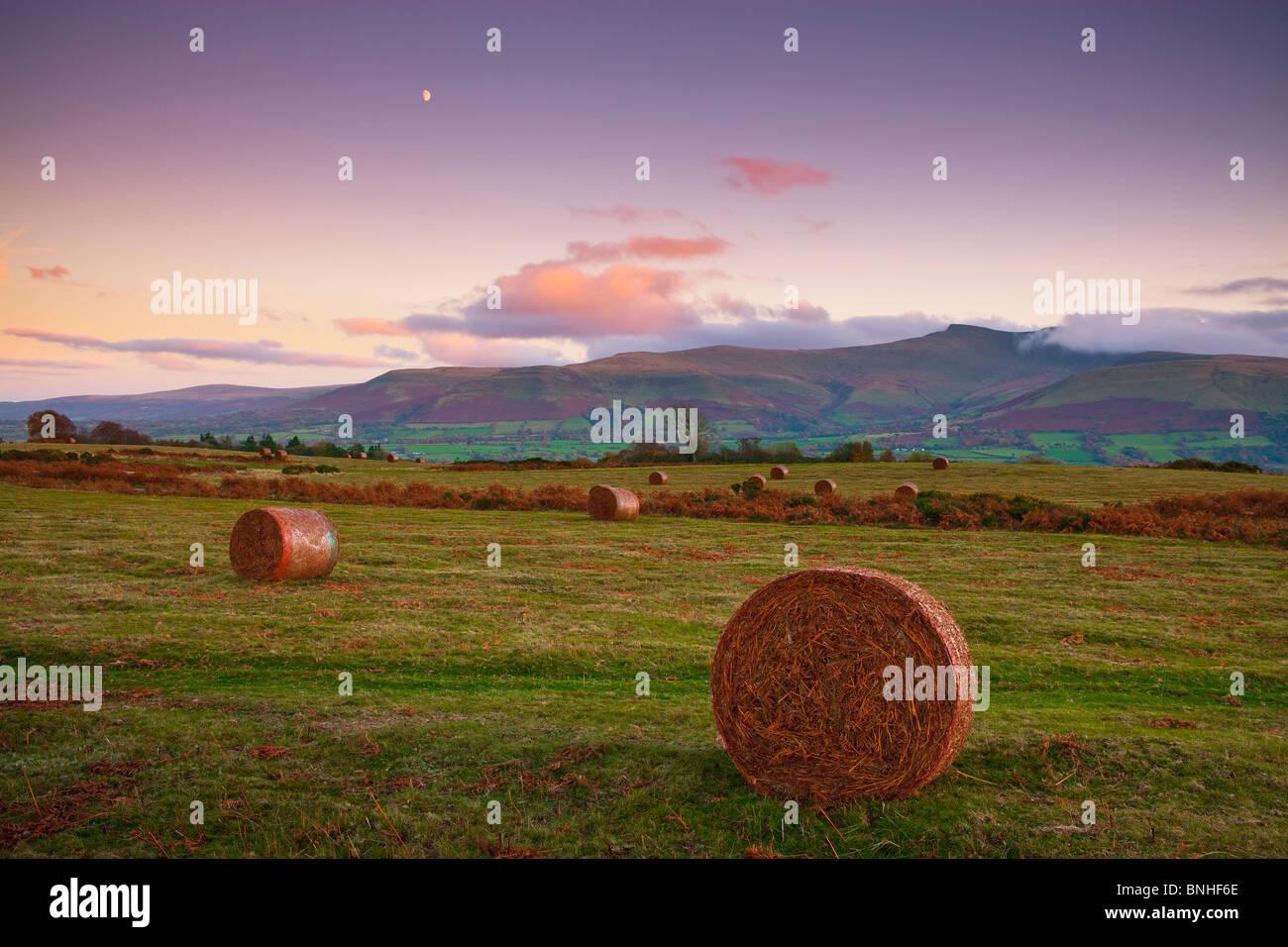 Mynydd común Illtyd Brecon Beacons Brecon Powys en Gales Imagen De Stock
