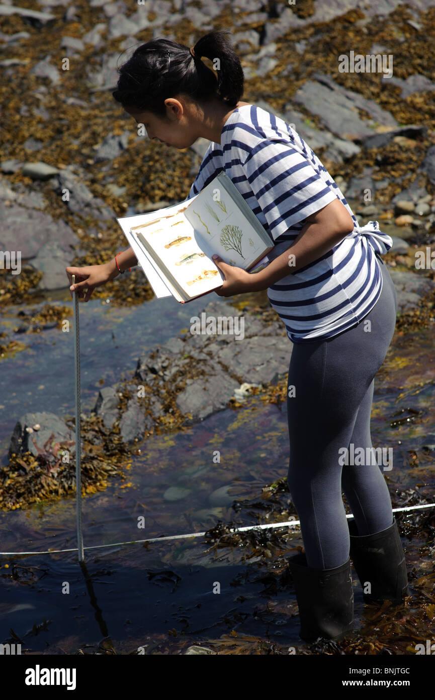 Estudiante de Bachillerato Internacional King George V Liceo Southport estudiar biología marina en rocas UK Imagen De Stock