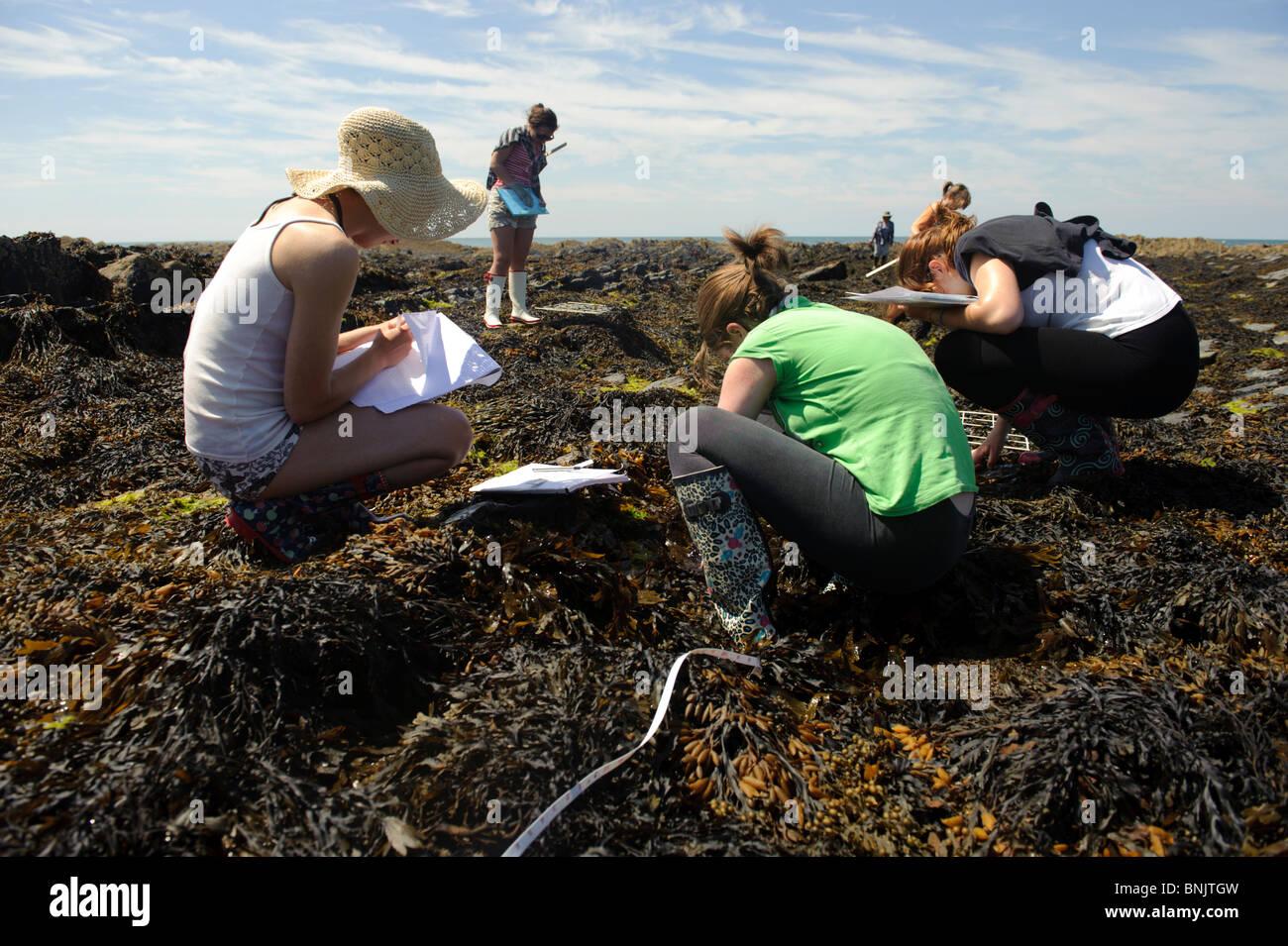 Los estudiantes de bachillerato internacional del King George V Liceo Southport estudiar biología marina en Imagen De Stock