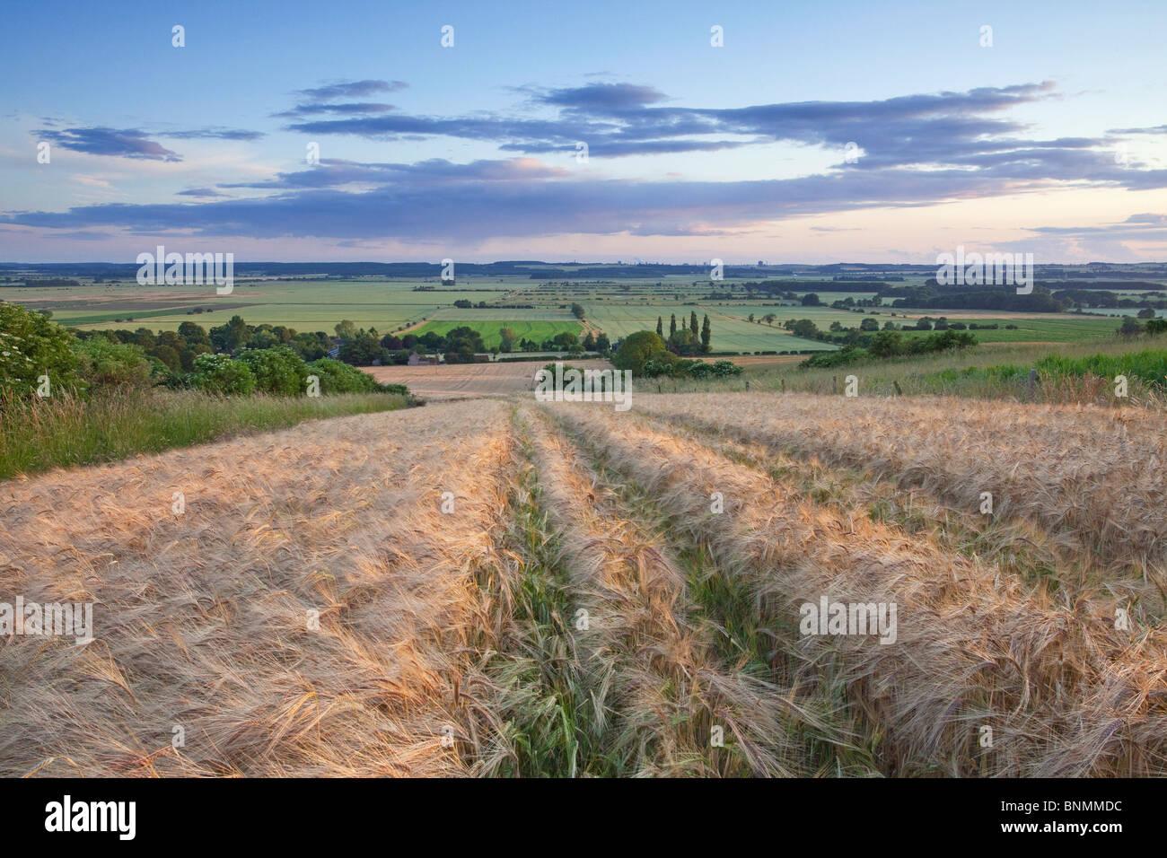 Una vista del valle del río Ancholme desde un campo de cebada en el Lincolnshire Wolds en una noche de verano Imagen De Stock
