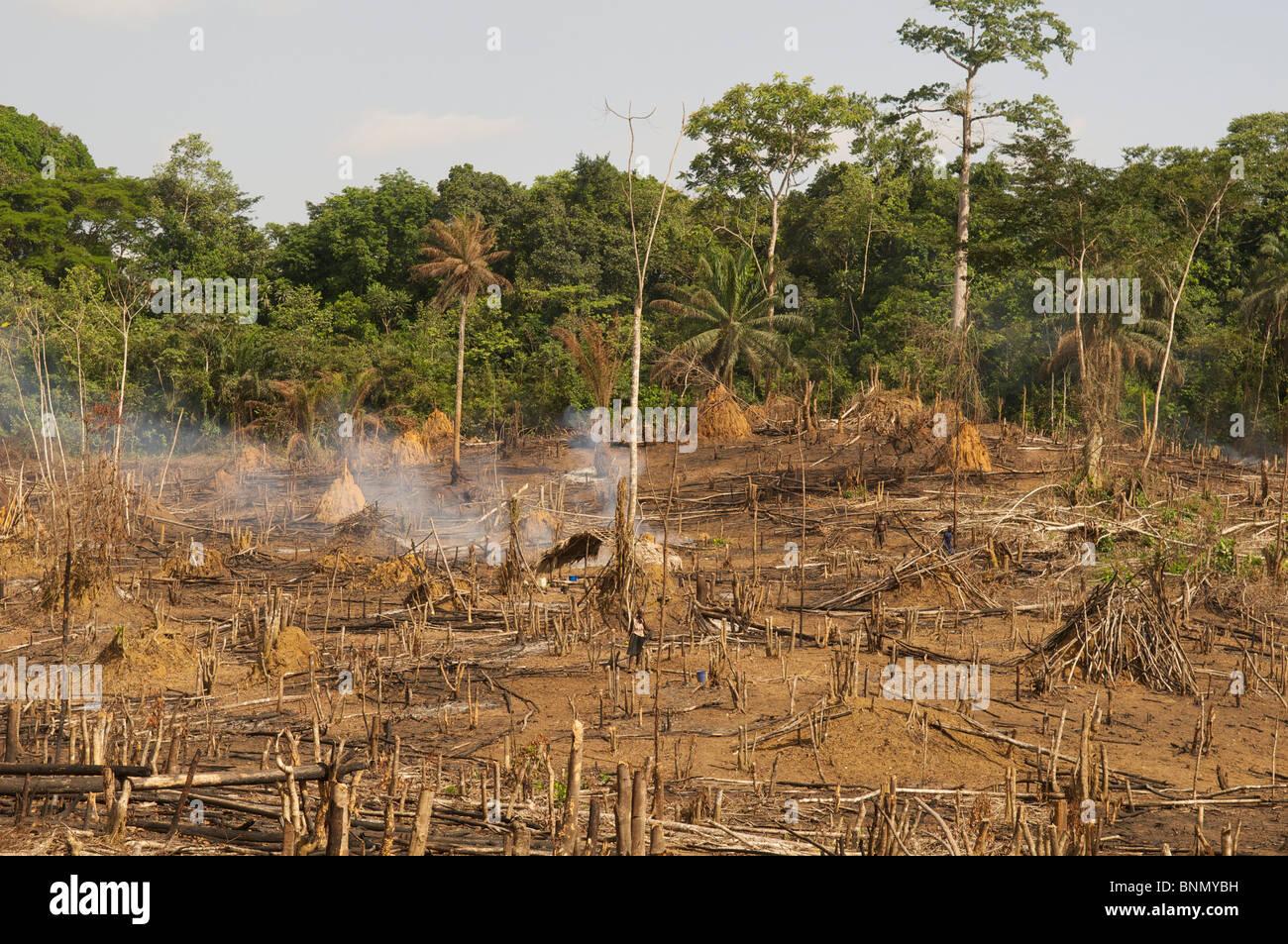 Roza y Quema la deforestación en Liberia Imagen De Stock