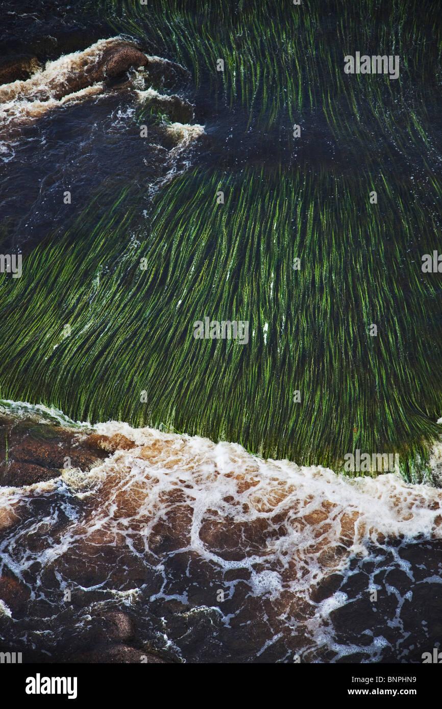 Agua verde hierba crea patrones abstractos en una serie de cascadas en el río Imagen De Stock
