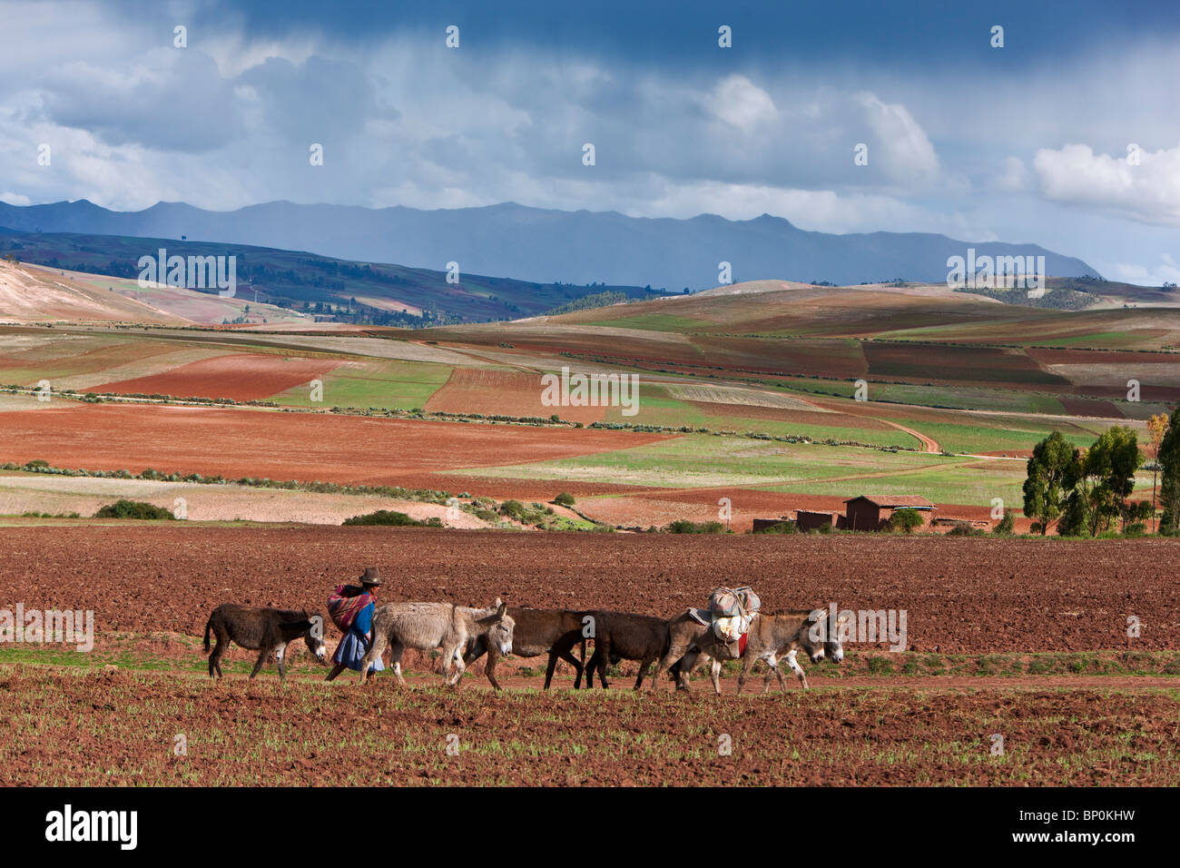 Perú, fértil país agrícola de gran altitud cerca de Maras. Imagen De Stock