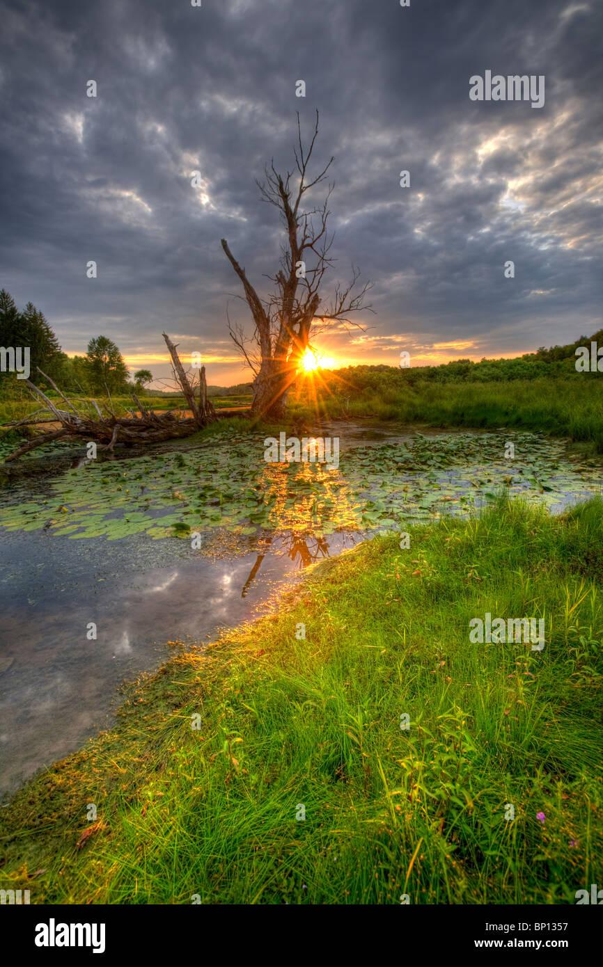 Una espeluznante pantano en el Condado de Montgomery, el centro del estado de Nueva York. Imagen De Stock