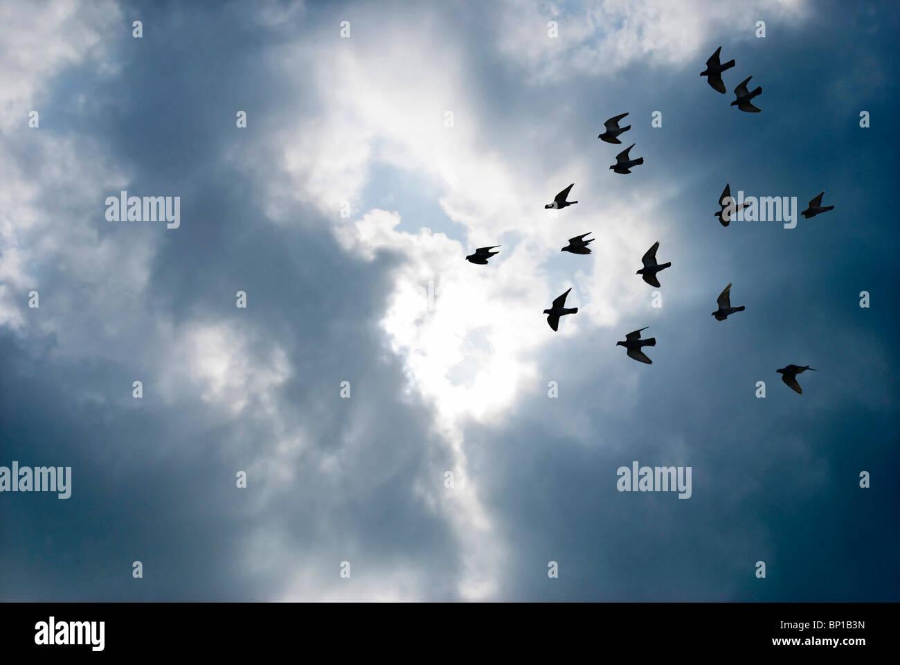 Pájaros volando innovador concepto de nubes grises volar superar. Imagen De Stock