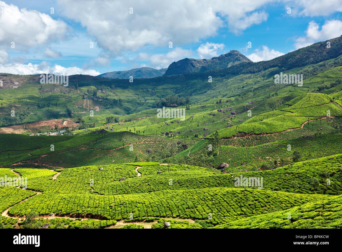 Plantaciones de té Imagen De Stock