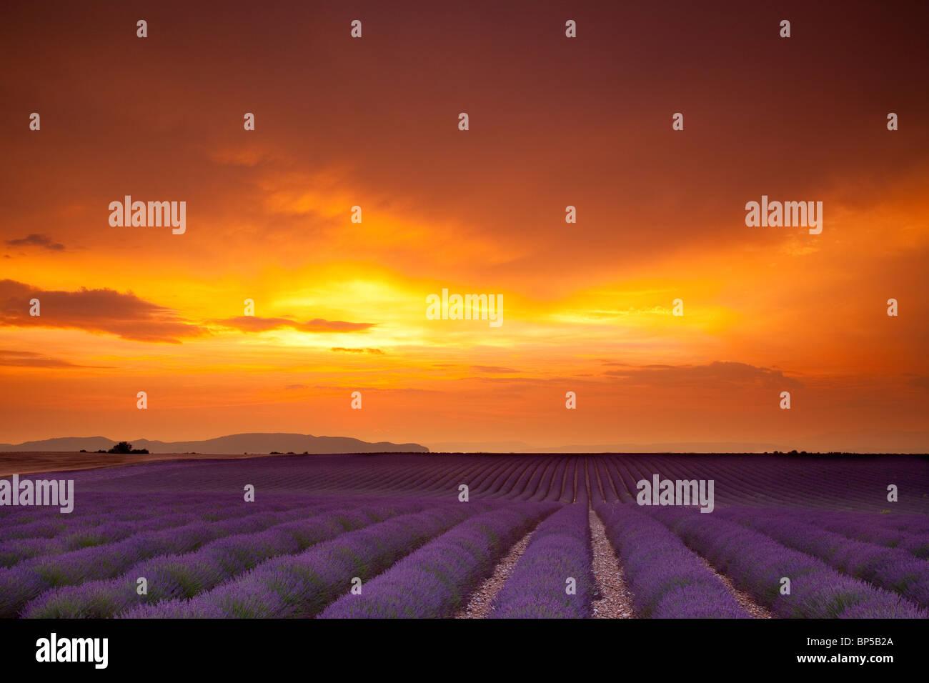 Los colores de la puesta de sol a lo largo de la Meseta de Valensole, Provenza Francia Imagen De Stock
