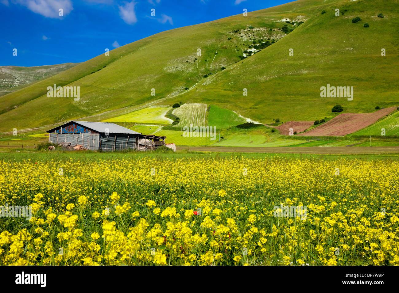 Farmer's choza rodeada de flores silvestres en el Piano grande cerca de Castelluccio, Umbria Italia Imagen De Stock
