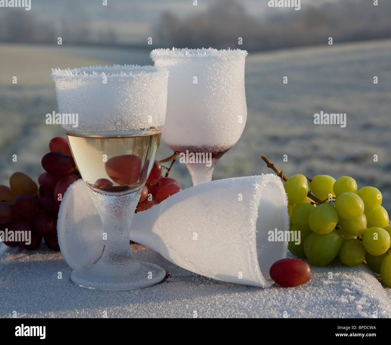 Frosted congeladas las copas de vino espumoso y uvas, temprano en la mañana la luz del sol en invierno la campiña de Kent Weald UK Foto de stock