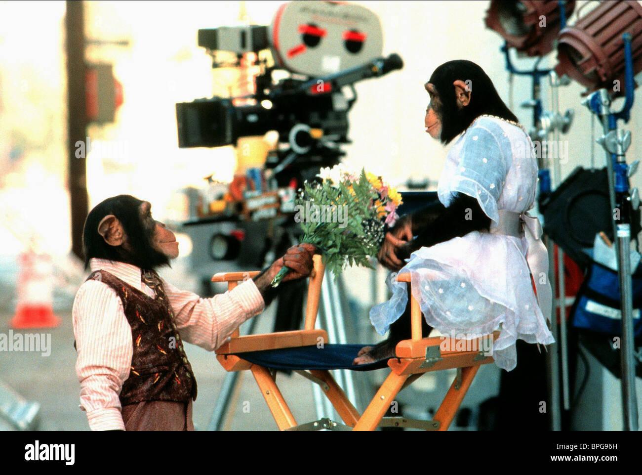 Los chimpancés Buddy (1997) Imagen De Stock