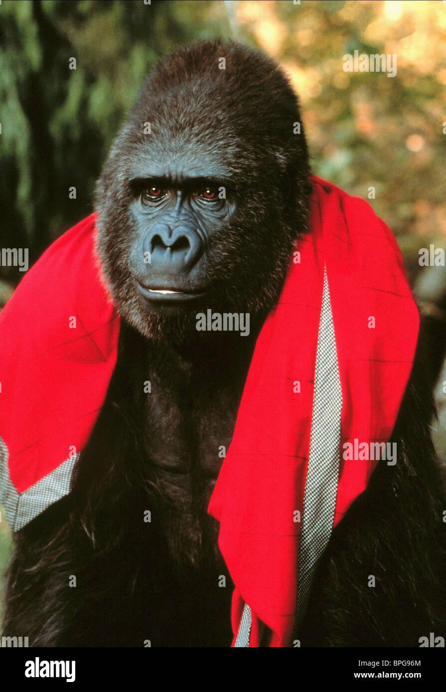 Gorila Buddy (1997) Imagen De Stock