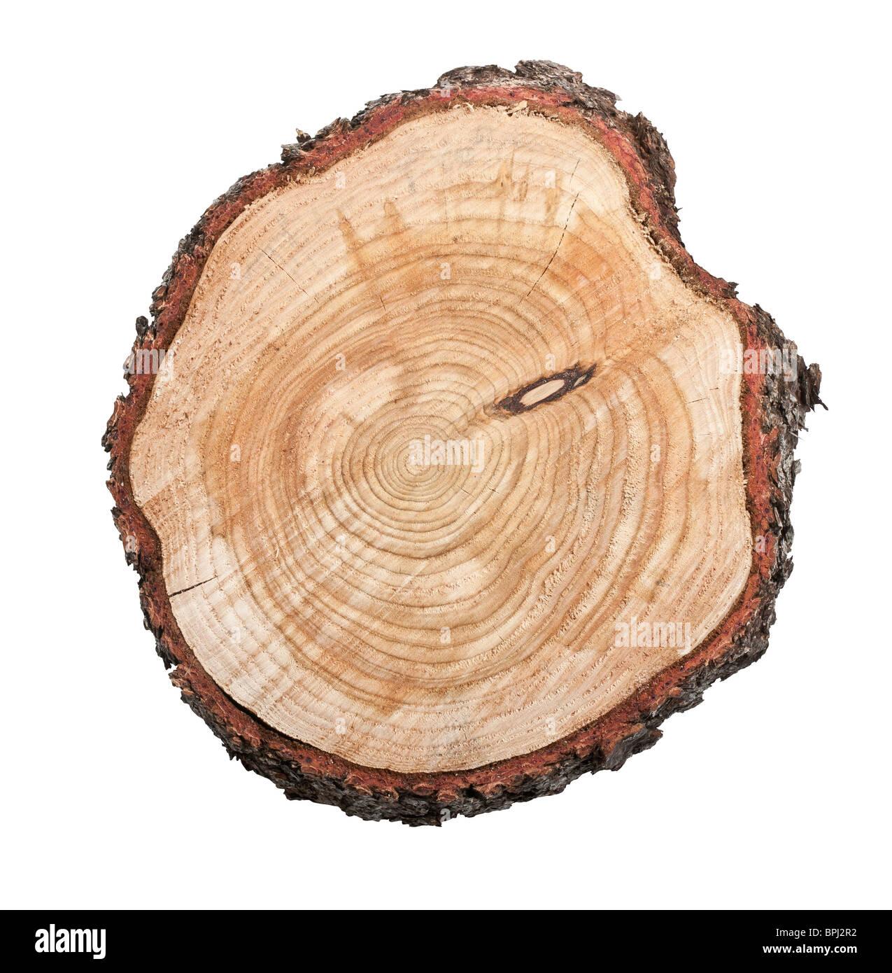 Vista superior de un tocón de árbol aislado sobre fondo blanco. Imagen De Stock