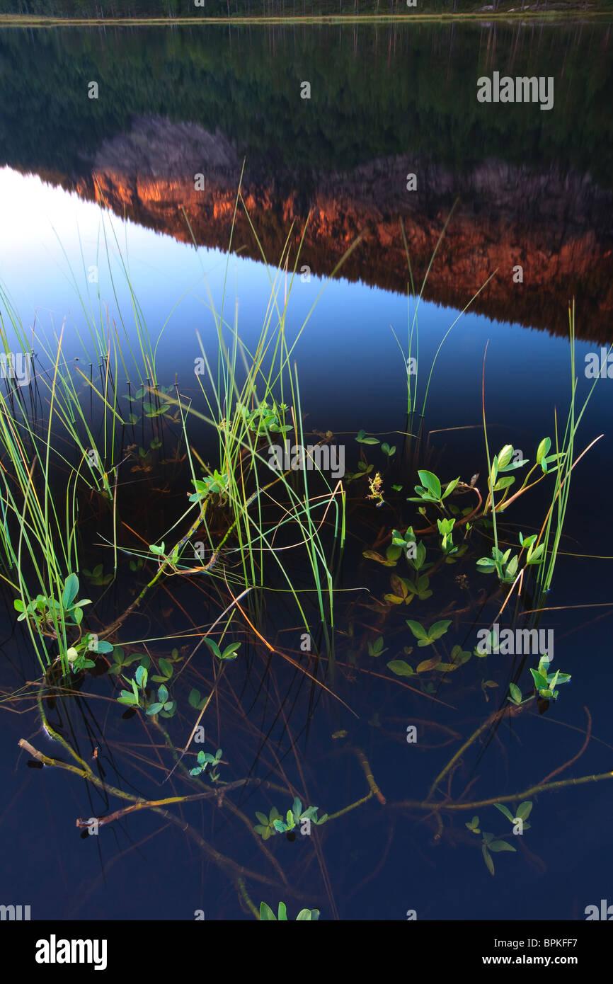 Plantas de agua en las orillas del lago de Andersnattjern. El monte Andersnatten se refleja en el lago. Desde Eggedal, Imagen De Stock