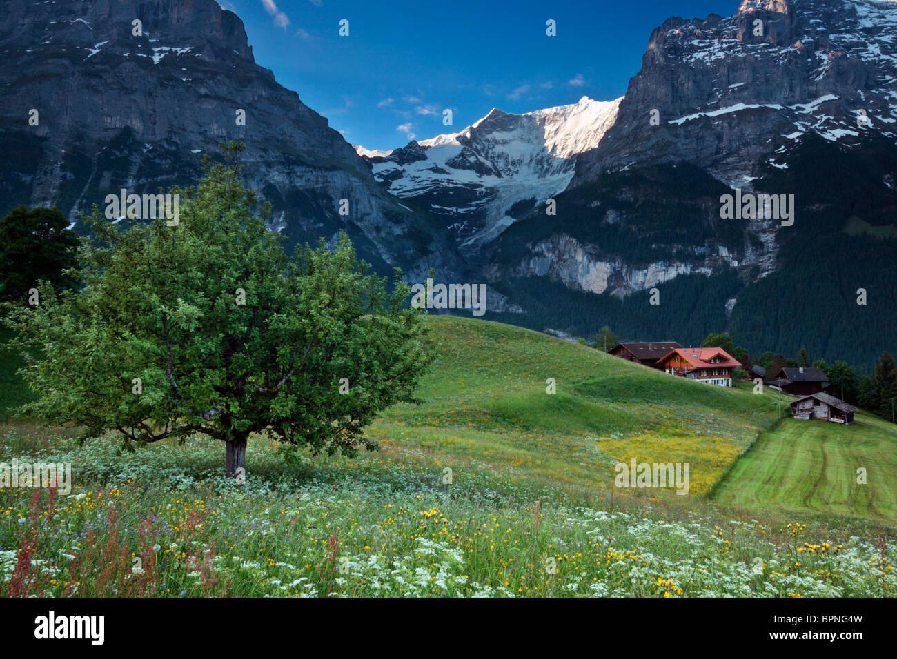 La luz de la mañana besa la cima de las montañas en el valle de Grindelwald, Suiza Imagen De Stock