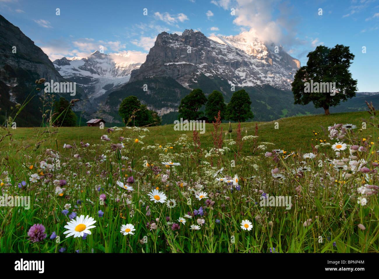 La luz de la mañana besa la cima del Eiger en el valle de Grindelwald, Suiza Imagen De Stock