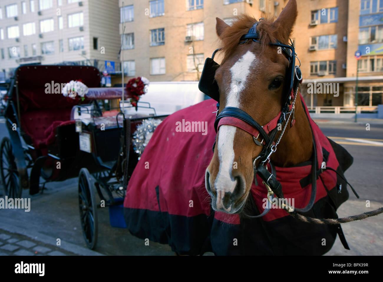 Caballo con carro clientes esperando al lado del Central Park en Nueva York Imagen De Stock