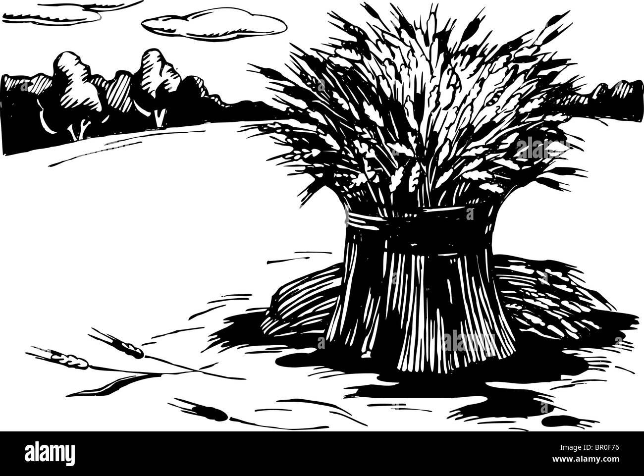 Una ilustración en blanco y negro de haces de trigo en el campo Imagen De Stock