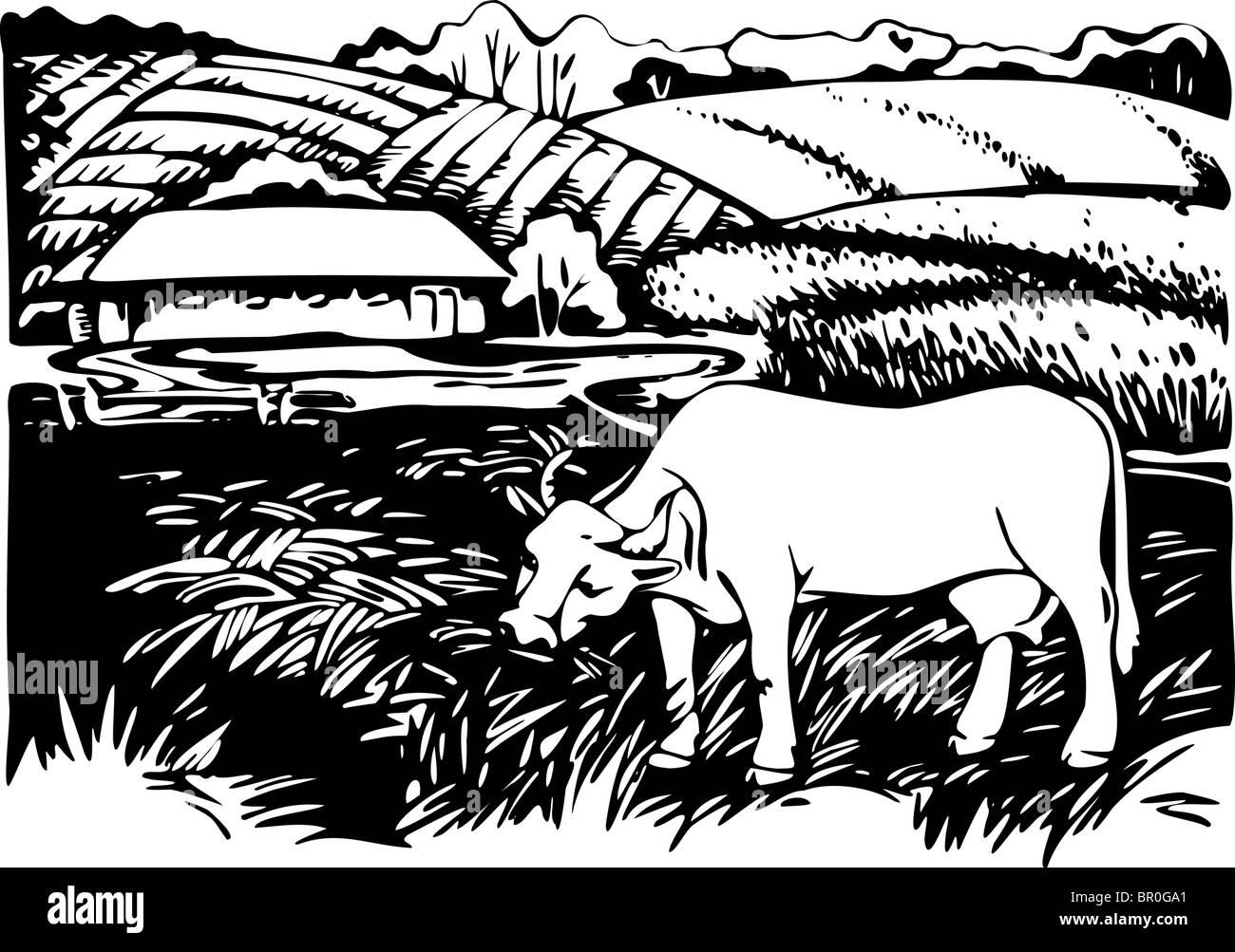 Vacas que pastan en pastos, en blanco y negro Imagen De Stock