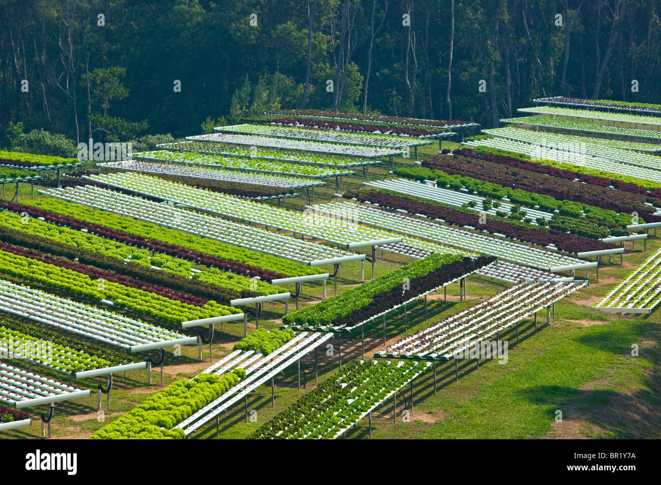 Australia, Queensland, Sunshine Coast, Pomona. Campos de terrazas de macrobiótica granja. Imagen De Stock